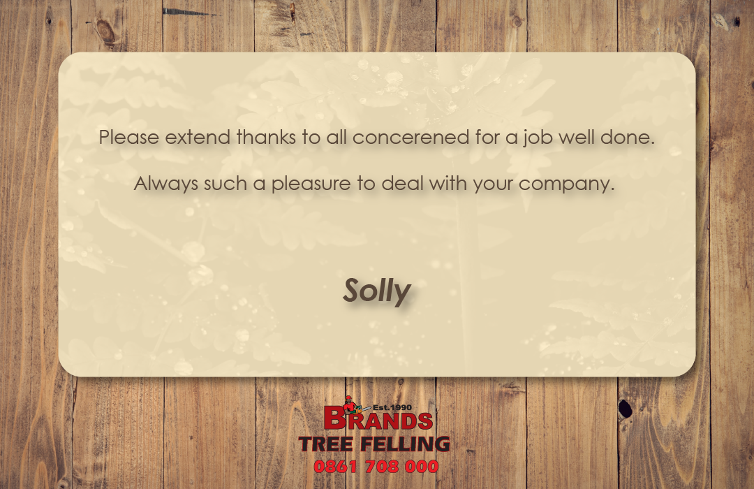 Compliment Tree Felling Tree Care Compliments