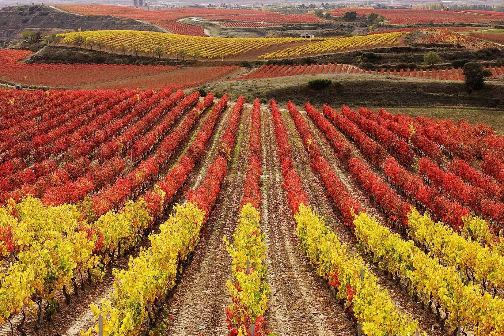 Viñedos La Rioja en otoño