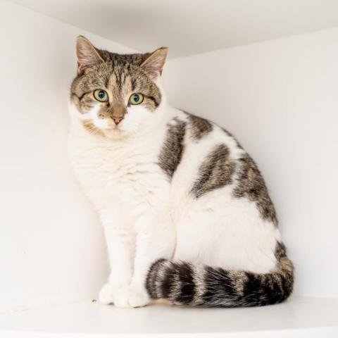 Adopt Lucy on in 2020 Cat adoption, Homeless pets