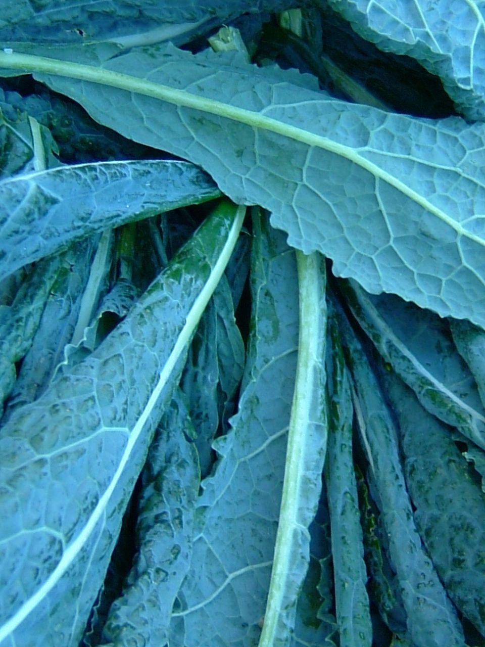 how to grow kale - harvest to table | Kitchen garden | Pinterest ...