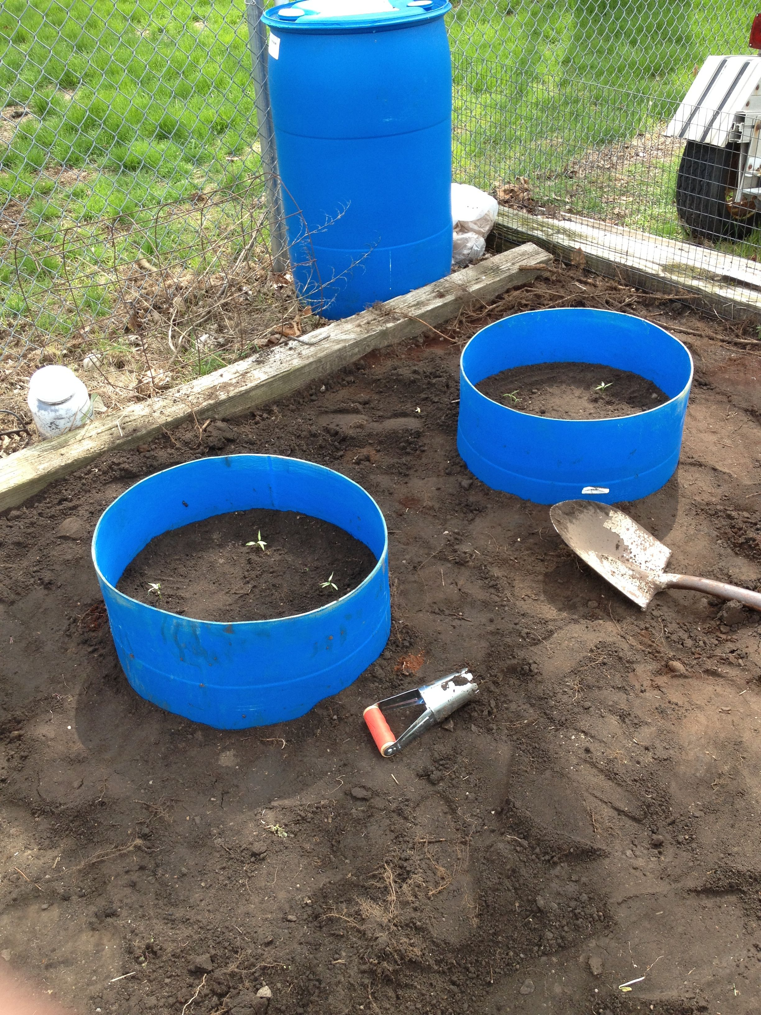 55 Gallon Barrels Cut In Half To Make Little Raised Garden Beds...really