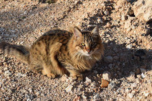 Cat, Feral, Outdoor, Animal, Kitten
