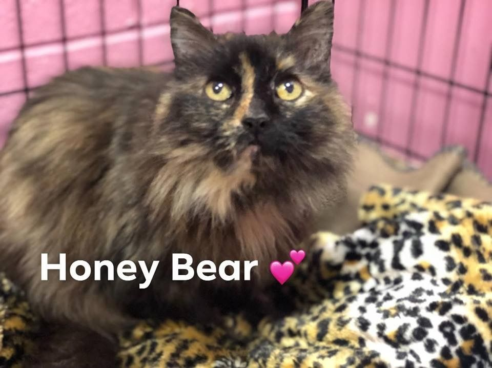 Adopt Honey Bear On Animal Shelter Quotes Cat Illnesses Animals
