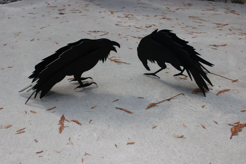 free raven photos