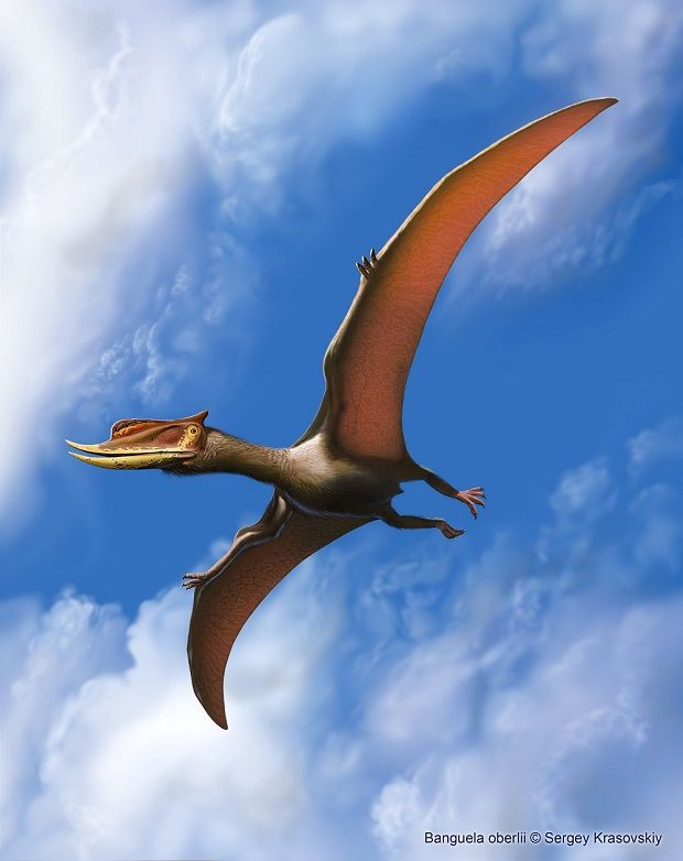 Banguela oberlii, Early Cretaceous, Pterosauria (pterodactyloid), Discovered by Headden & Campos, 2013, Artwork by Sergey Krasovskiy