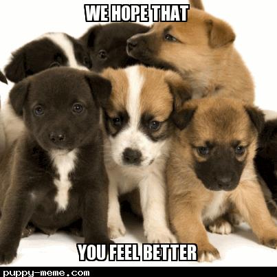 20 Laughable Memes To Make Anyone Feel Better About Life Sayingimages Com Feel Better Feelings Feel Better Meme