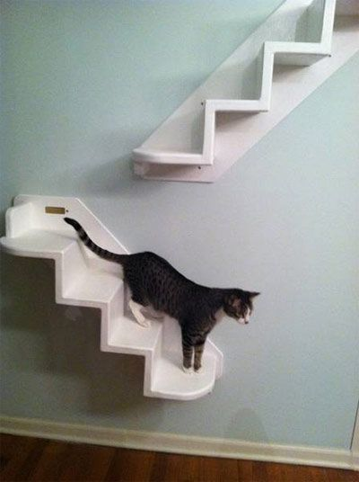 CAT+STAIRS+FOR+THE+WALL … (With images)   Cat stairs, Diy ...