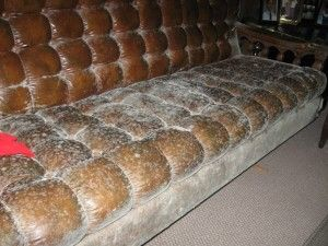 Mold Grows On Furniture In Damp Basements Mold In Basement Damp