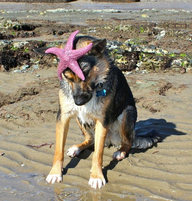 """""""but.. I don't want this starfish on my head!"""" :c"""