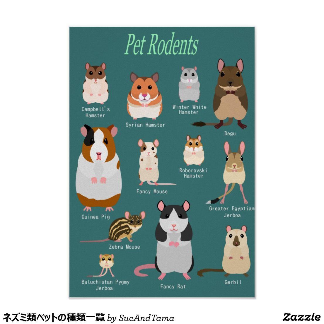 ネズミ類ペットの種類一覧 ポスター ペット ネズミ ポスター