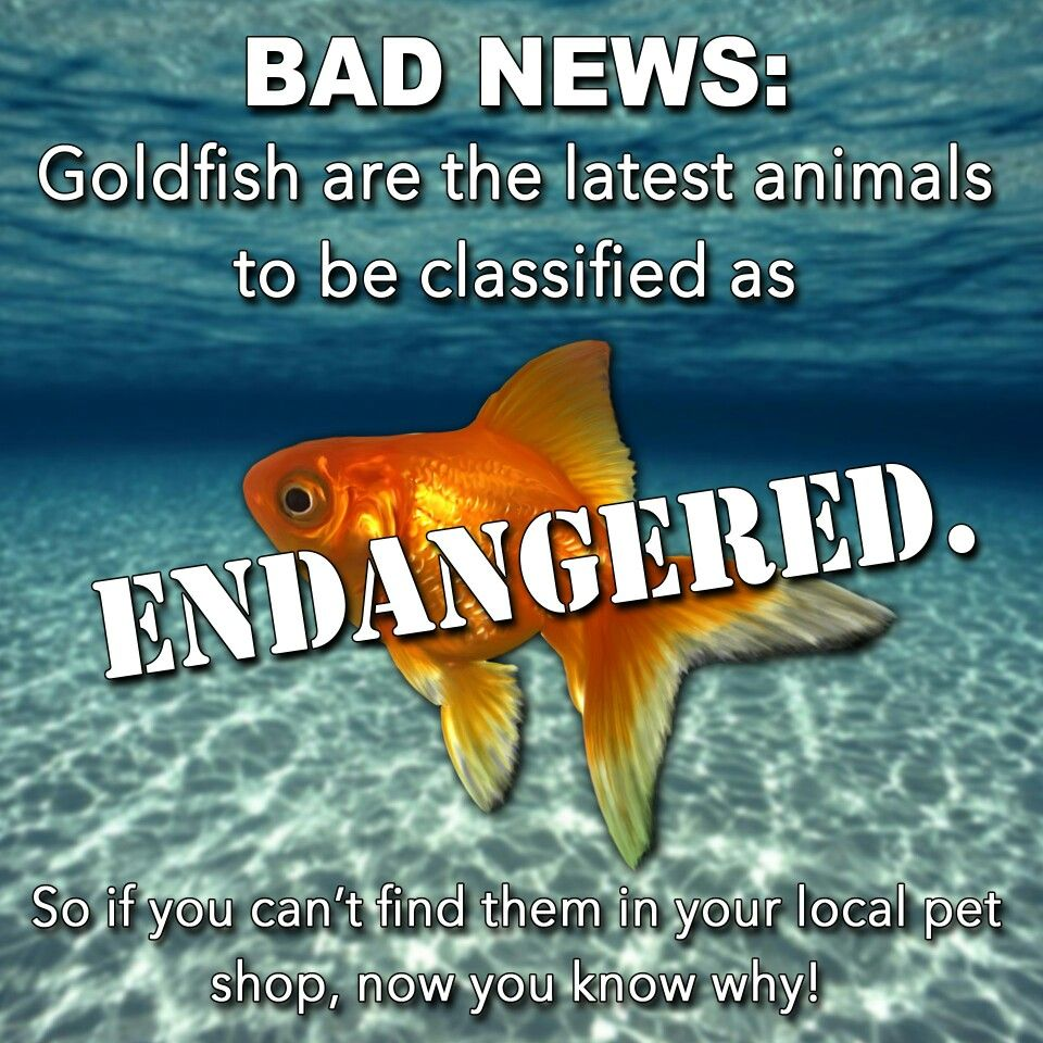 Goldfish are endangered