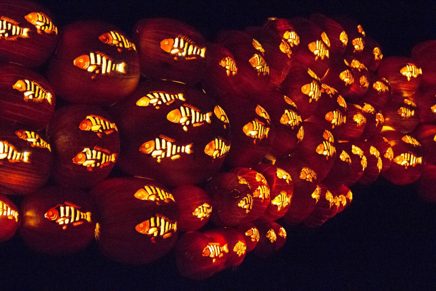 5 000 Carved Pumpkins Twinkle At Rise Of The Jack O Lanterns