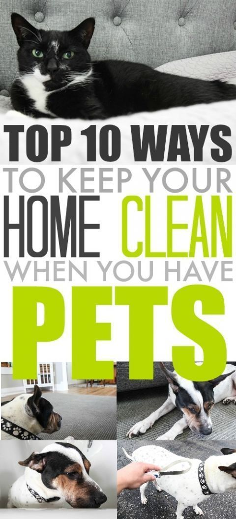 Tips And Ideas For Keeping Your Home A Little Bit Cleaner When You