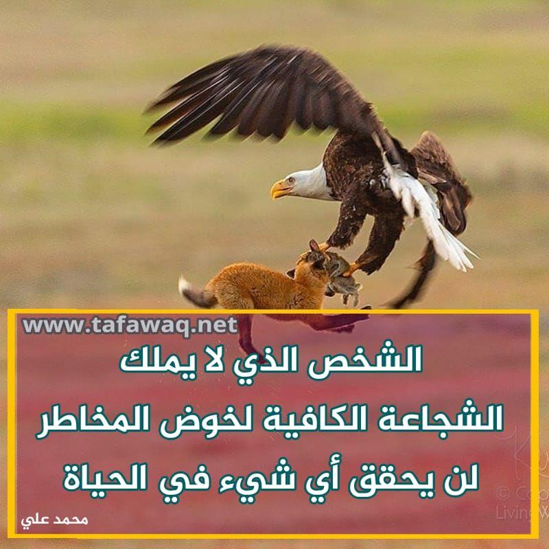 Pretty Printable عبارات تحفيزية للوحات المهام School Art Activities Creativity Quotes Arabic Quotes