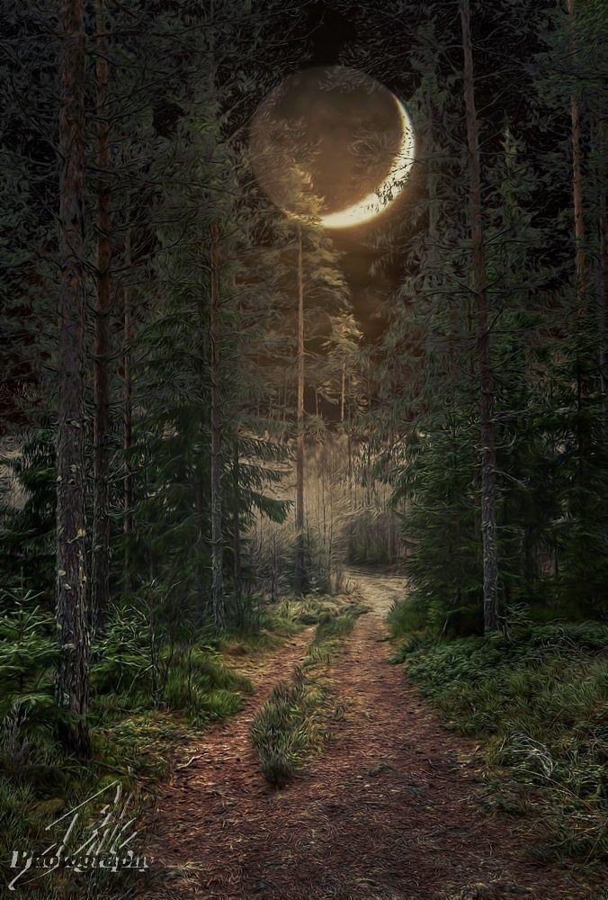 Картинки ночь в лесу и луна