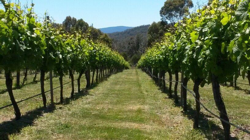 Gorgeous Winter Brook vineyard view #WestTamarValley #Loira #Tasmania