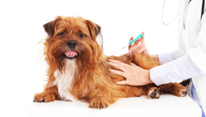 What Shots Do Puppies Need And Exact Puppy Vaccination Schedule