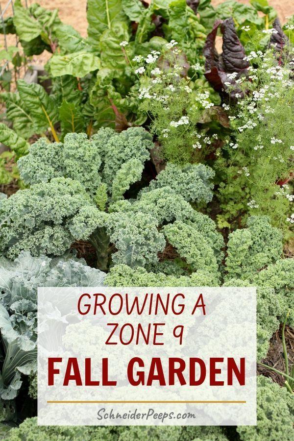 How to Grow a Zone 9 Fall Garden