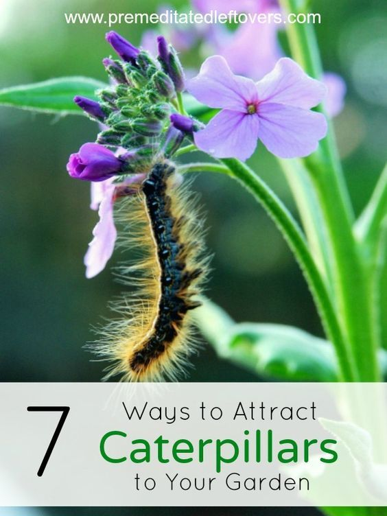 Enjoy Gardening Without The Breaking Your Back With This: 7 Ways To Attract Caterpillars To Your Garden- You Can't