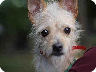 Pet Not Found Kitten Adoption Dog Adoption Pets