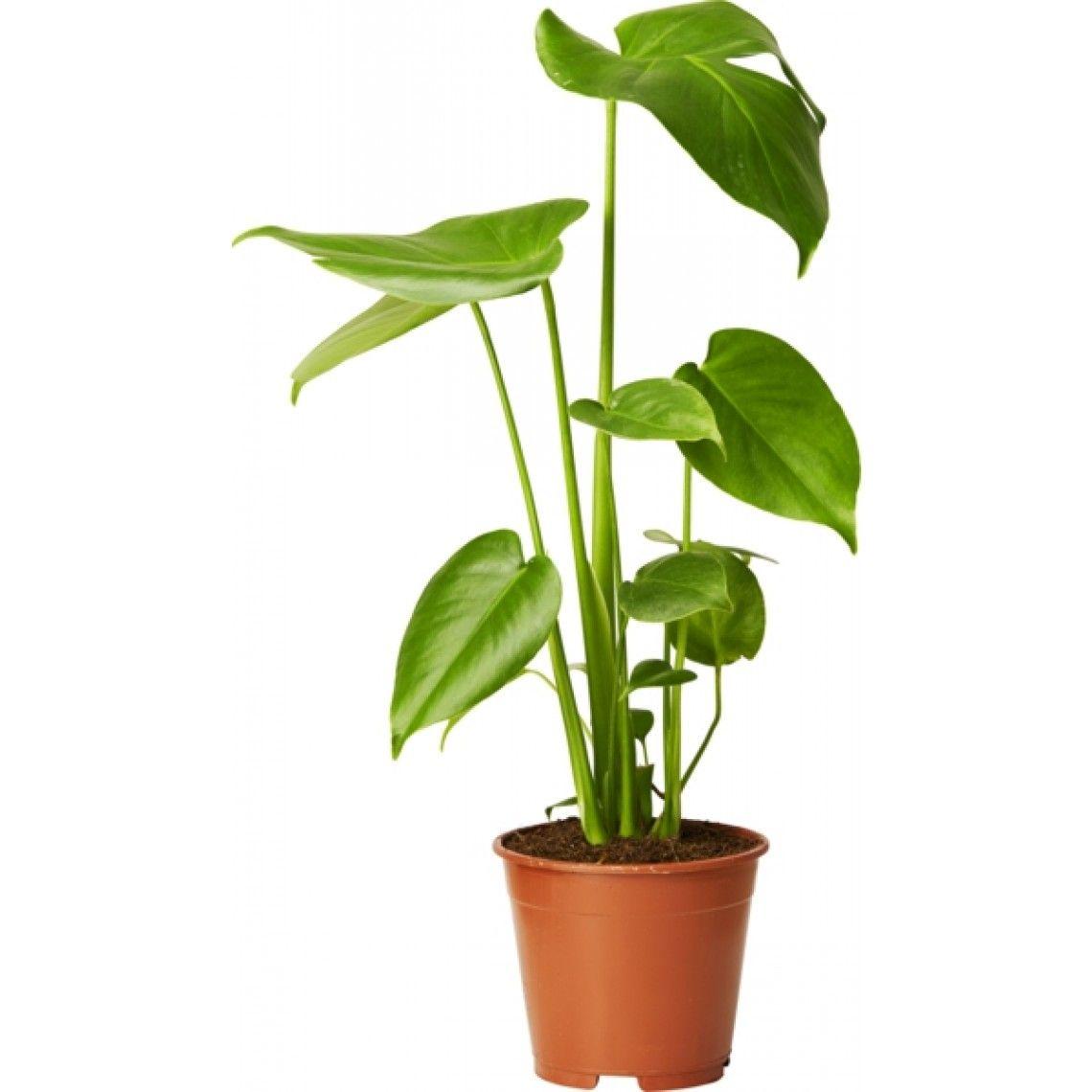 gröna bladväxter inomhus