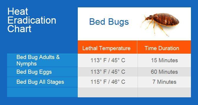 Bed Bugs Bugmaster Pest Control Kelowna Vernon Penticton Pest Control Bed Bugs Bed Bugs Treatment