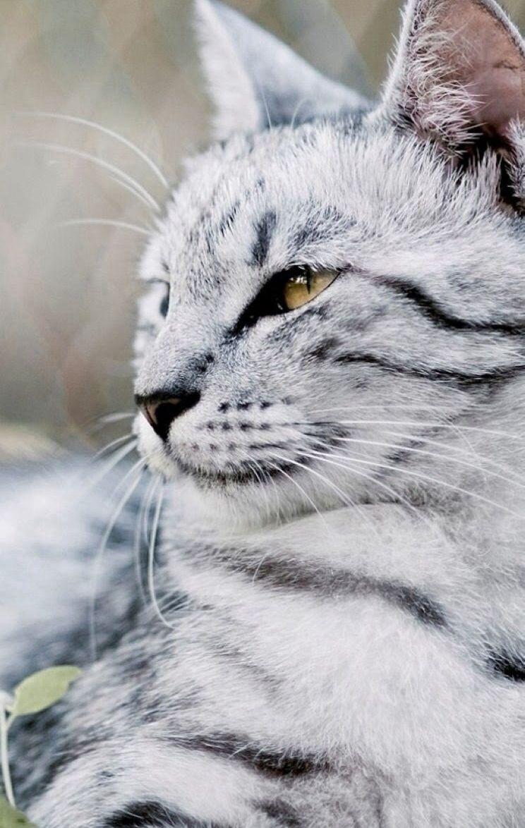 Пин от пользователя Marisa Leng на доске Cats | Кошки ...