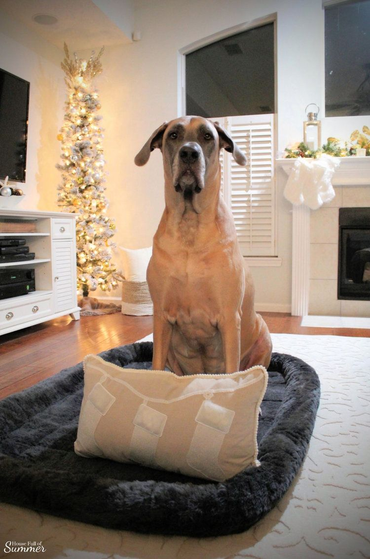 A Charming Southern Christmas Home Tour {Part 2} #magnoliachristmasdecor A Charming Southern Christmas Home Tour {Part 2} | House Full of Summer - Master Bedroom Christmas decor ideas, navy Christmas decorations, blue and white holiday decor, foyer, Gold Magnolias and Southern Christmas decorating ideas. XXL Dog Bed, crate liner, dog mat, Great Dane, English Mastiff, Daniff, large breed dog #magnoliachristmasdecor