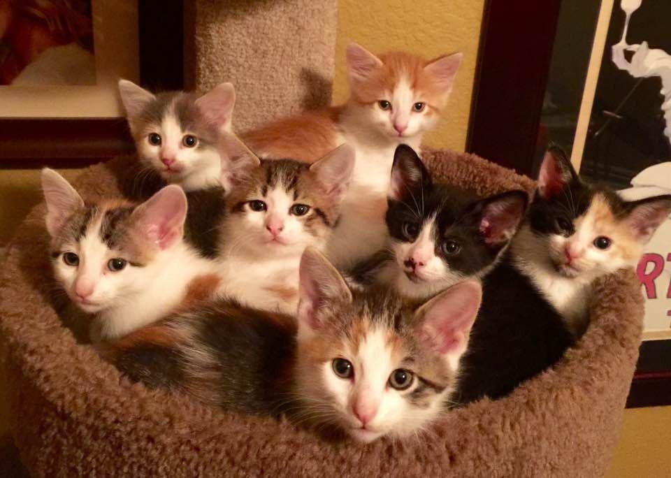 Rescue Cat Mom Hears Orphaned Kittens Cry, She Runs to