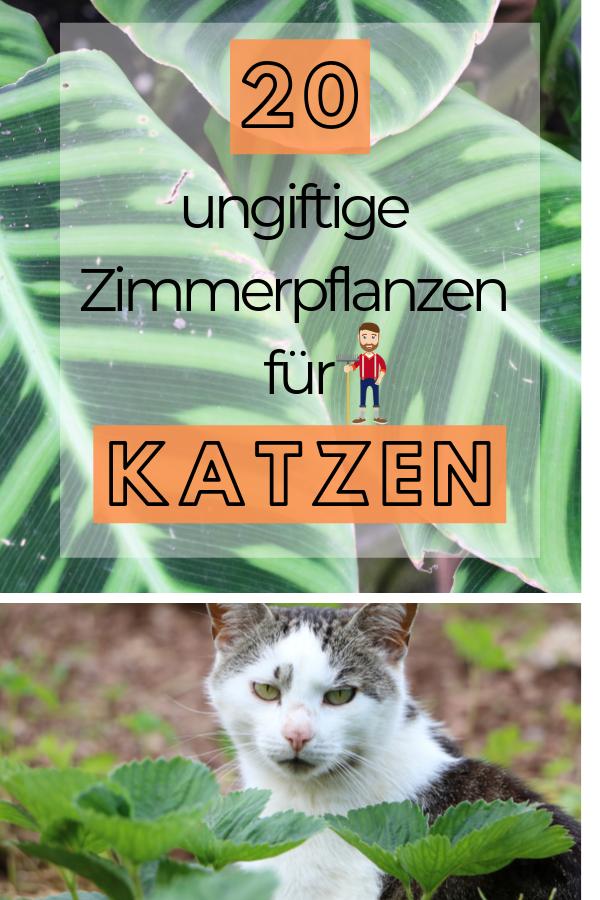 Ungiftige Zimmerpflanzen Fur Katzen 20 Schone Ungiftige Pflanzen In 2020 Ungiftige Zimmerpflanzen Ungiftige Zimmerpflanzen Fur Katzen Pflanzen