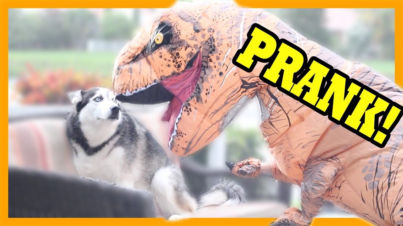 TRex Dinosaur Suit PRANK on my dog (With images