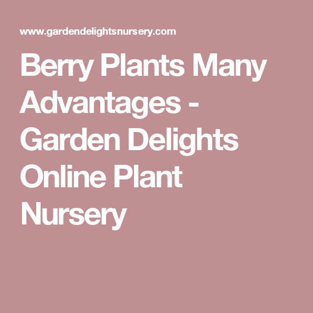 Berry Plants Many Advantages Garden Delights Online Plant Nursery