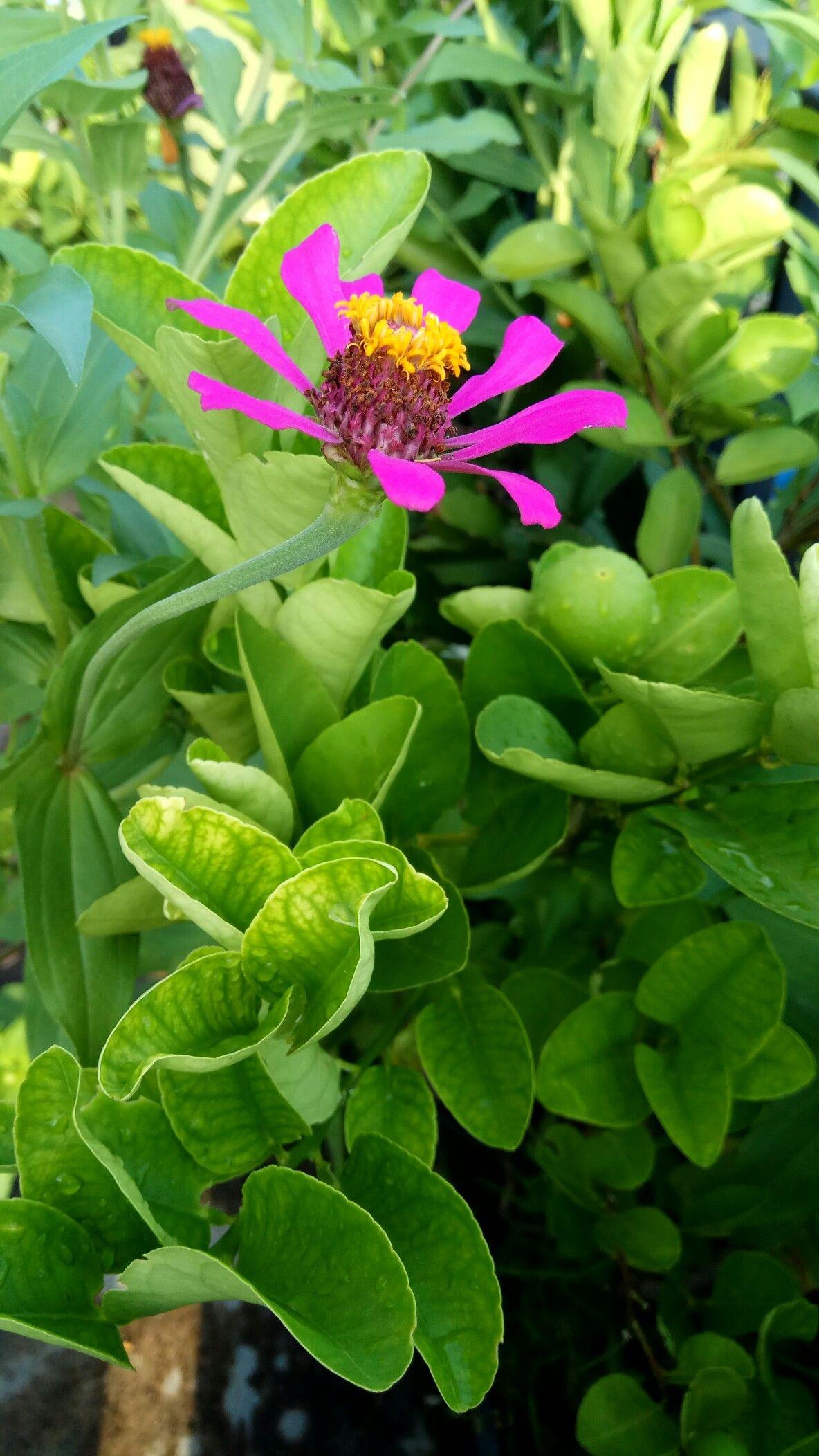 Tumbuhan Bunga Liar Bunga