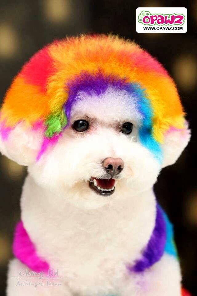 Opawz Pet Hair Dye Grooming Www Opawz Com Puppies And Kitties Dog Friends Dog Grooming