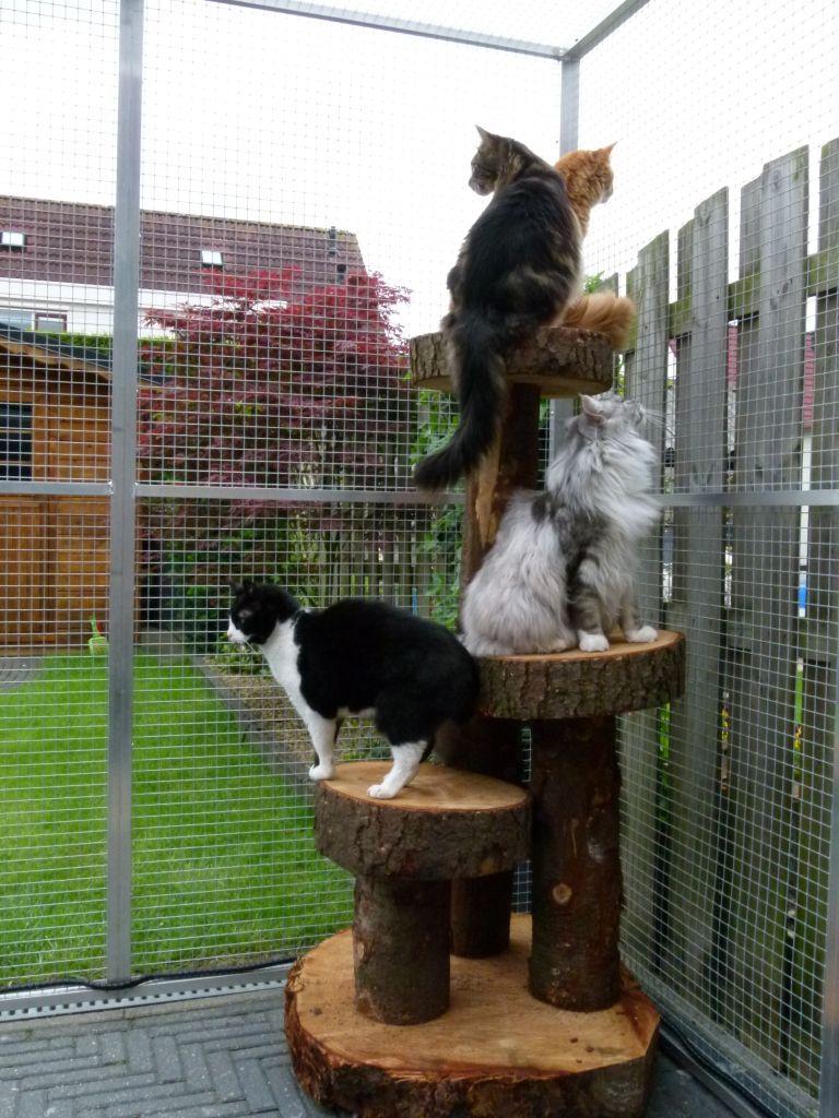 Inrichting kattenren idee n voor decoratie pinterest katten krabpaal en tuin - Deco kleine tuin buiten ...