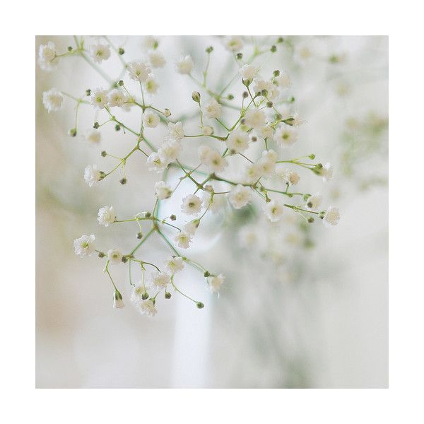 little weed of flowers ❤ liked on Polyvore featuring backgrounds ...