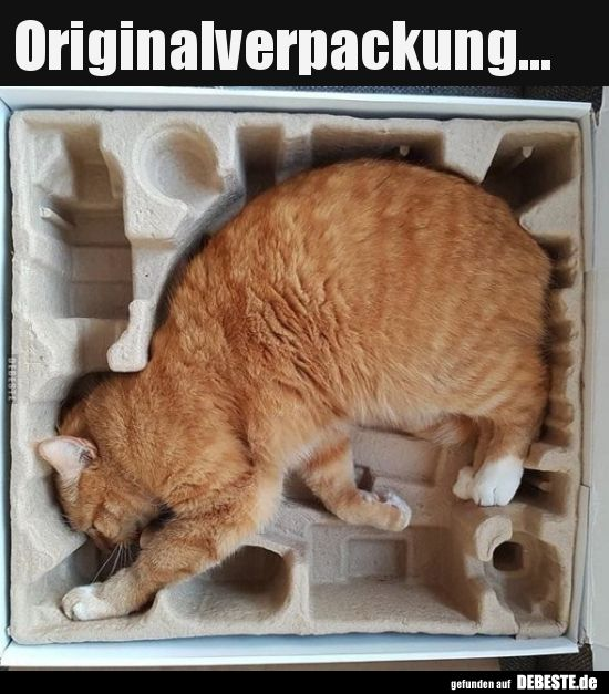 originalverpackung witzig katzen katzen witze und lustige katzen
