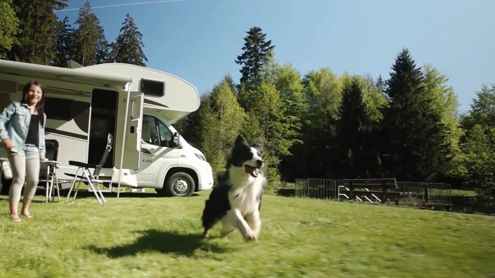 tierisch gut unterwegs tipps zum reisen mit tieren wohnmobil wohnmobilreise reisenmittieren. Black Bedroom Furniture Sets. Home Design Ideas
