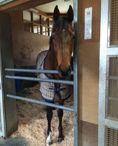 モデルか!?写真大好きなマカヒキ - netkeiba.com | マカヒキ, 美しい馬 ...