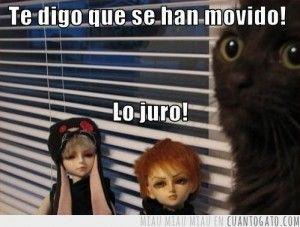 Créele al gato #imagendeldia - Cachicha.com