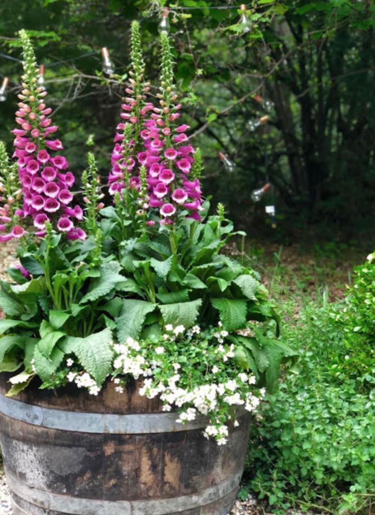 15 Unique And Beautiful Container Garden Ideas Wine Barrel Planter Foxglove Idees Jardin Idees De Jardin Fleur Petit Jardin Anglais