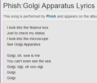 Phish - Golgi Apparatus Lyrics | MetroLyrics