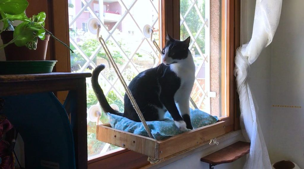 A diy cat window perch animaux