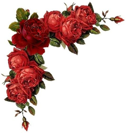 Pin By Nour On Cenefas Esquineros Guardas Red Roses Floral Floral Image