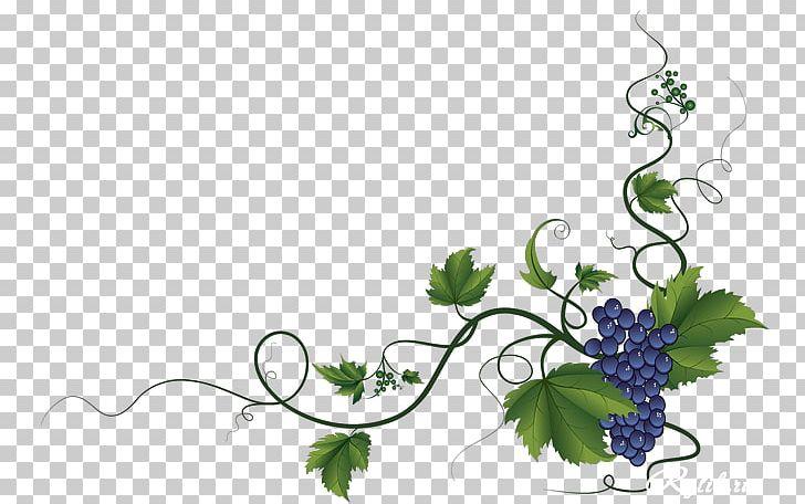Common Grape Vine Wine Grape Leaves Decorative Borders Png Grape Vines Christmas Tree Art Grape Leaves