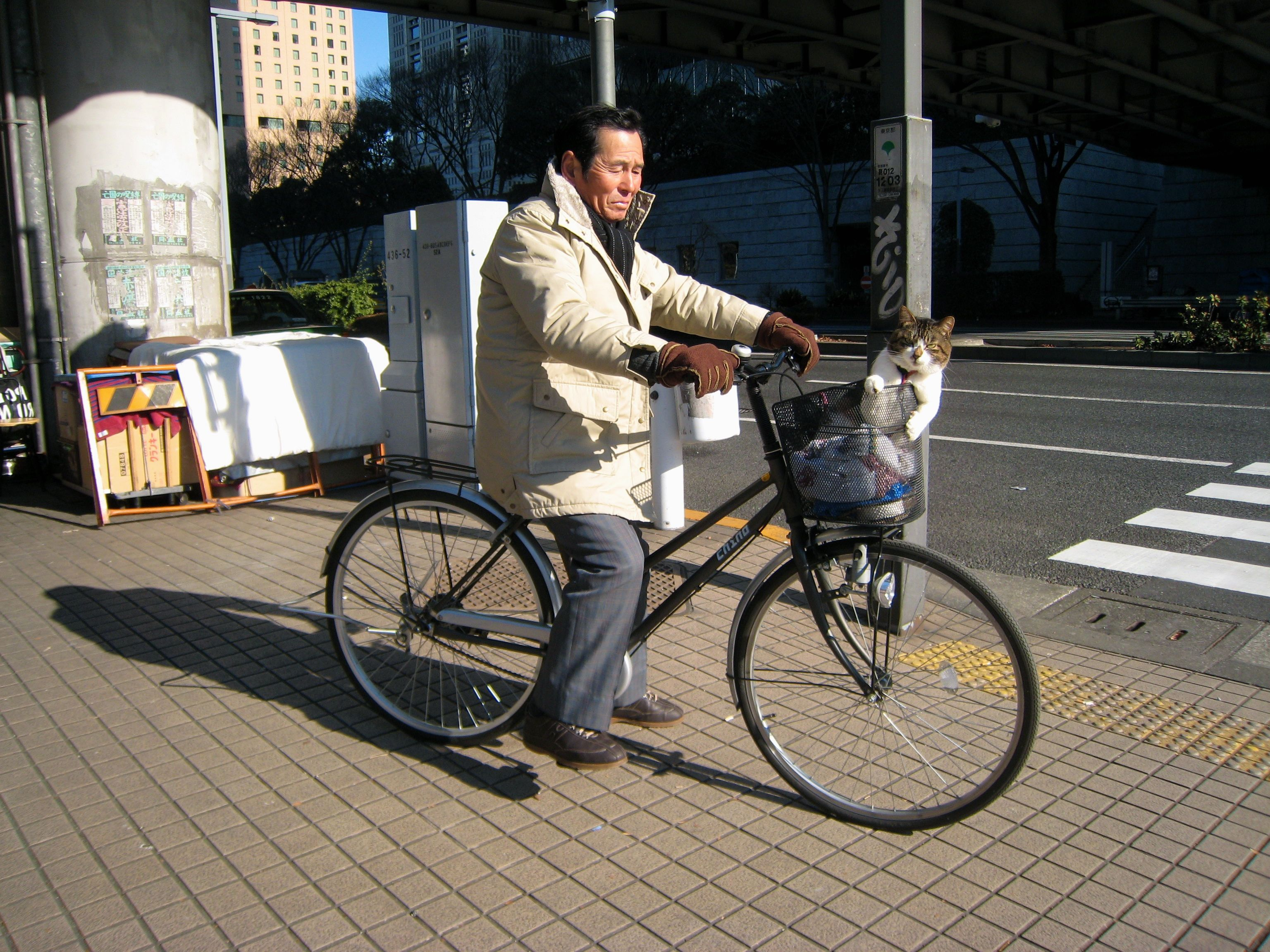 Cat In Bike Basket Bicycle Bike Basket Bike