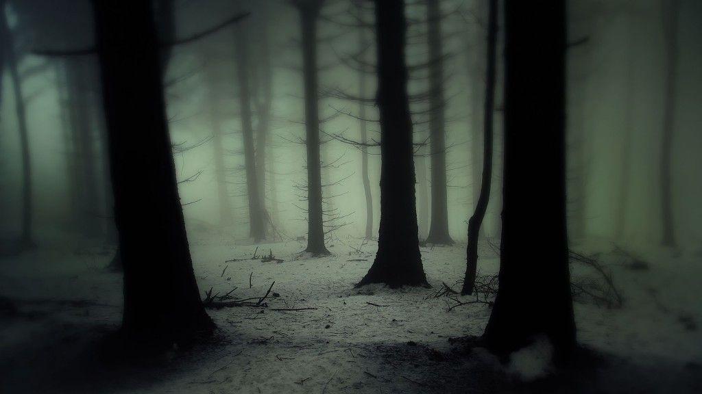 Télécharger 1024x576 arbres paysages nature bois forêt sombre il ... | Forêt sombre, Image foret ...