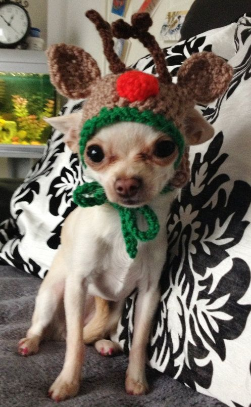 Reindeer dog hat - for small breed - Medium size dogs chihuahua ...