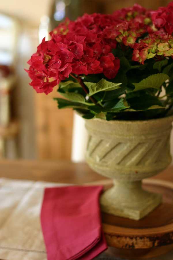 Raspberry Hydrangeas ~ Nesting with Style