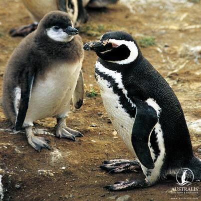 Haciendo Amigos #crucero #expedición #patagonia #destinos